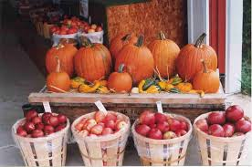 Apple Pumpkin Picking Syracuse Ny by 15 Reasons Why Fall Is The Best Season