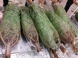 Simon Pearce Christmas Tree Sale by Christmas Light Recycling Christmas Lights Decoration