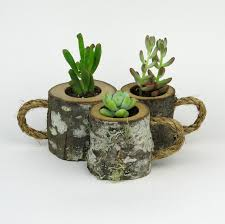 3 Rustic Succulent Planters Coffee Mugs Log Planter Cactus Holder Plant Pots Desk Small Indoor From WoodlandFever On Etsy