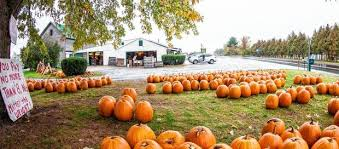Medina Pumpkin Patch 2014 by Best Pumpkin Patches In Upstate Ny 21 Picking Destinations For