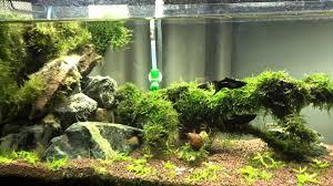 DIY Aquascape