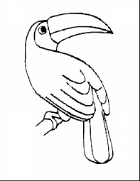 Great Toucan Coloring Pages Printable With Bird And For Adults Simple