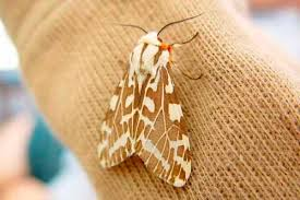 How to rid of moths a review of the best traps sprays