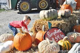 Pumpkin Patch Fredericksburg Va by Leesburg Animal Park Pumpkin Village Northern Virginia