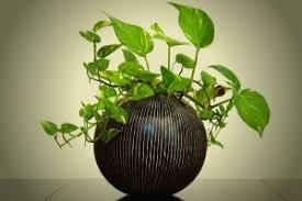 plante de bureau purifier l air au bureau grâce aux plantes