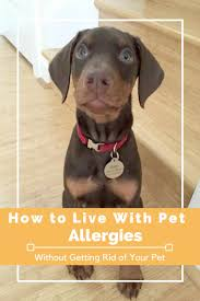 Petco Dog Shedding Blade by Best 25 Pet Allergies Ideas On Pinterest Allergies In Dogs