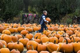 Hayden Idaho Pumpkin Patch by Dry Weather Attracts Crowds For Green Bluff U0027s Apple Festival The