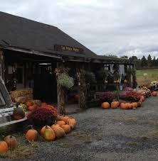 Pumpkin Picking In Ct by Pickin U0027 Pumpkins At The Pickin U0027 Patch