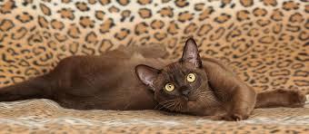 10 Top Non Shedding Cats Care munity