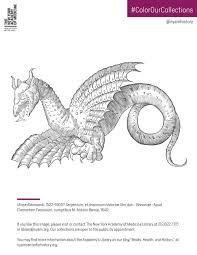 Dragon From Ulisse Aldrovandi Serpentum Et Draconum Historiae Libri Duo 1640