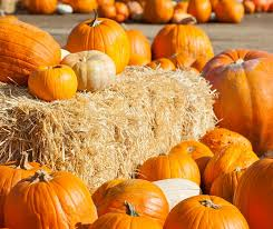Pumpkin Patch Tampa 2014 by Outdoor Fall Activities In Tampa Bay