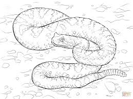 Click The Sonoran Desert Sidewinder Coloring Pages