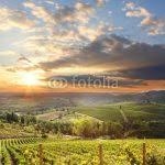 Chianti Vineyard Landscape In Tuscany Italy Wallpaper Mural By Limitless Walls