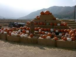 Stanly Lane Pumpkin Patch Napa 2015 by 37 Best Just For Fall Images On Pinterest Art Designs Aspen And