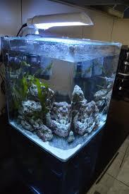 aquarium nano eau de mer recifal que mettre dans un nano de 60 litres les poissons