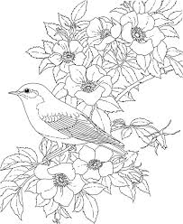 Free Printable Coloring PageNew York State Bird And Flower Eastern Bluebird