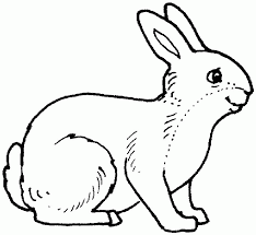 Coloring Pages Of Hamsters Many Interesting Cliparts