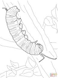 Click The Monarch Caterpillar Coloring Pages