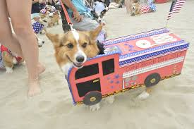 "More Than 1 000 Corgis Took Over Alamitos Beach for ""California"