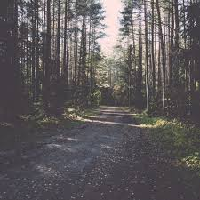 Feeling Down Take A Walk In The Woods Pacific Standard