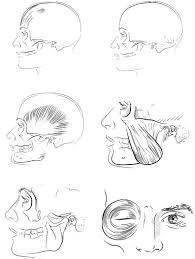 The Kaplan Anatomy Co Contemporary Art Websites Medical Coloring Book