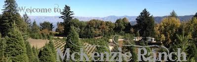 Santa Cruz County Christmas Tree Farms by Mckenzie Ranch Christmas Tree Farm