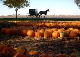 Meadowbrook Pumpkin Farm Creepy Cornfield by Patches Near Mequon Wisconsin