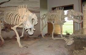 Agate Fossil Beds by Daeodon 2 6 17 Allosaurus Roar