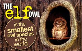Unbelievable Facts About Barn Owls That'll Make Your Head Spin 55 Best Owl Images On Pinterest Barn Owls Children And Hunting Owls How To Feed Keep An Owlet Maya A Brief Introduction The Common Types Of Six Reasons Why You Dont Want An Owl As Pet Bird Introducing Gizmo Baby Whitefaced Youtube 2270 Animals 637 Oh Meine Uhus I Love Owls My Barn Cat Baby By Disneyqueen1 Deviantart All Things Nighttime Predator Cute Animals