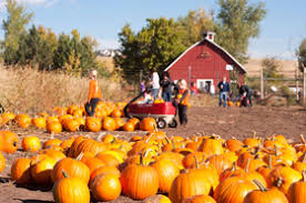 Chatfield Pumpkin Patch Hours by Our Community Fulcrum Publishing