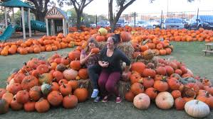 Half Moon Bay Pumpkin Festival Biggest Pumpkin by Seniors Travel To Half Moon Bay California Senior Citizen Travel