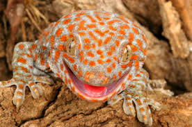 Crested Gecko Shedding Behavior by Which Gecko Species Is Right For You