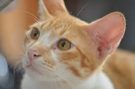 cat wont eat cat not causes of appetite loss in cats canna pet