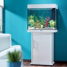 poisson pour débutant maxi zoo