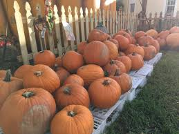 Pumpkin Patch Miami Lakes by Manny Cid Mayormannycid Twitter