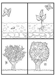 Life Cycle Of Apple Tree Coloring Page