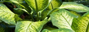 entretien plante grasse d interieur les jardinières bloom iq