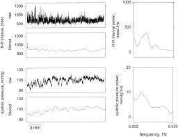 rr interval normal range mechanisms underlying low frequency rr interval oscillations