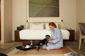 Pampered Pets Bed And Biscuit by Napa Valley Woofers Pet Friendly Hotels The Visit Napa Valley Blog