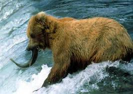 Official State Animal Of California The Grizzly Bear