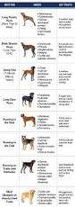 Non Shed Dog Breeds Large by Best Dogs For Running Put Your Shoes On And Have Fun