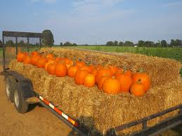 Sand Mountain Pumpkin Patch by Pumpkin Patch And Corn Maze In Richmond At Lloyd Family Farms