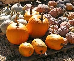 Connecticut Field Pumpkin by Une Tarte à La Citrouille Ou Pumpkin Pie Pour La Toussaint
