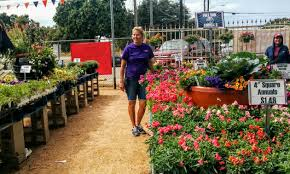 110780552.jpg Baby Austin Red Barn Nursery Pumpkin Patch Best 2017 25 Painted Cribs Ideas On Pinterest Rustic Nursery Wood Bonney Lassie A Visit To Mcauliffes Garden Center Make Your Yard The Envy Of Corn Poppies 2015 Patches In Austin And Beyond Free Fun In Greenhouse Geerlings