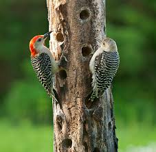 Searching for the Ultimate Homemade Suet Feeder