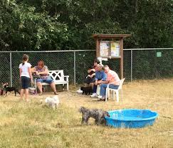Pumpkin Patch Bellingham Wa got dogs explore 7 off leash options in bellingham whatcomtalk