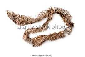 Shed Snake Skin Pictures by Snake Skin Shed Stock Photos U0026 Snake Skin Shed Stock Images Alamy