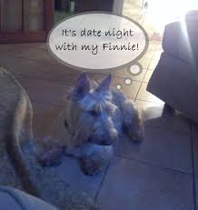 Dogs That Dont Shed Too Much by Date Night Finn U0026 Charley Too