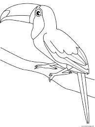 Coloriage Toucan Avec Lettre Dans Son Bec Coloriages à Imprimer