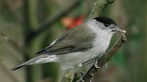 winter bird visitors to your garden wiggly wigglers